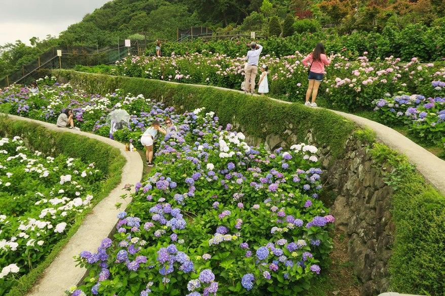 taibei_flower_126