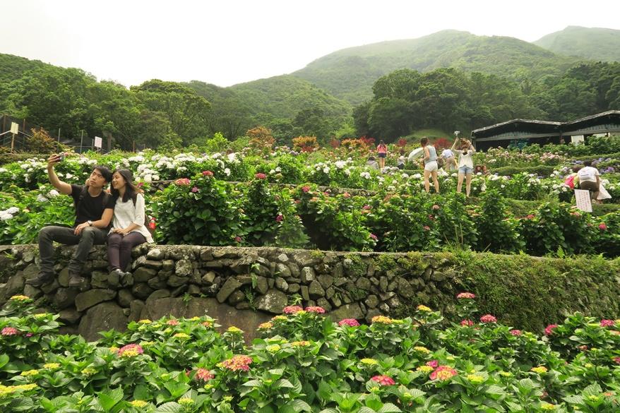 taibei_flower_130