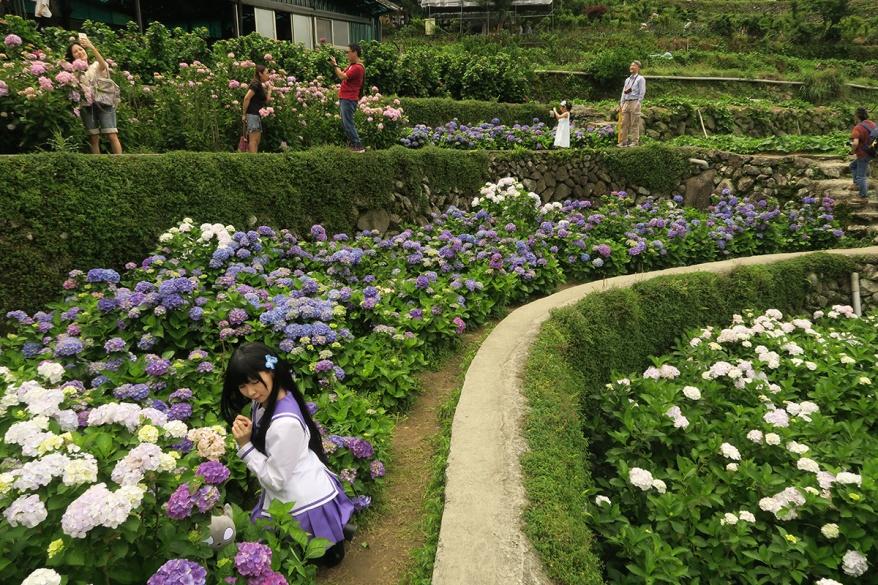 taibei_flower_141