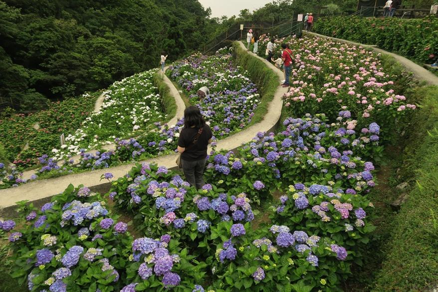 taibei_flower_147