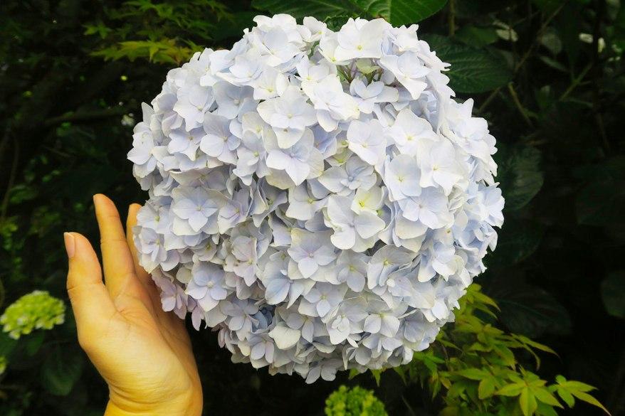 taibei_flower_36