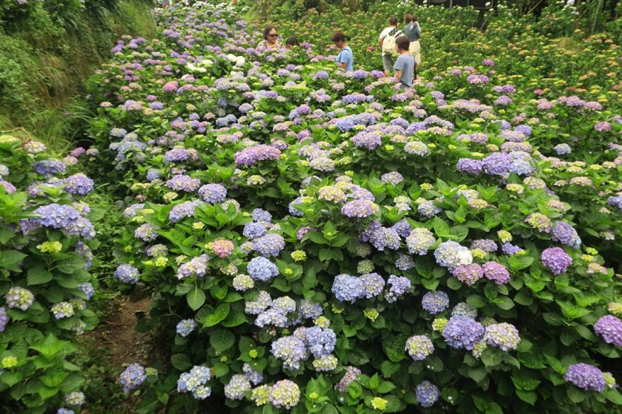taibei_flower_54