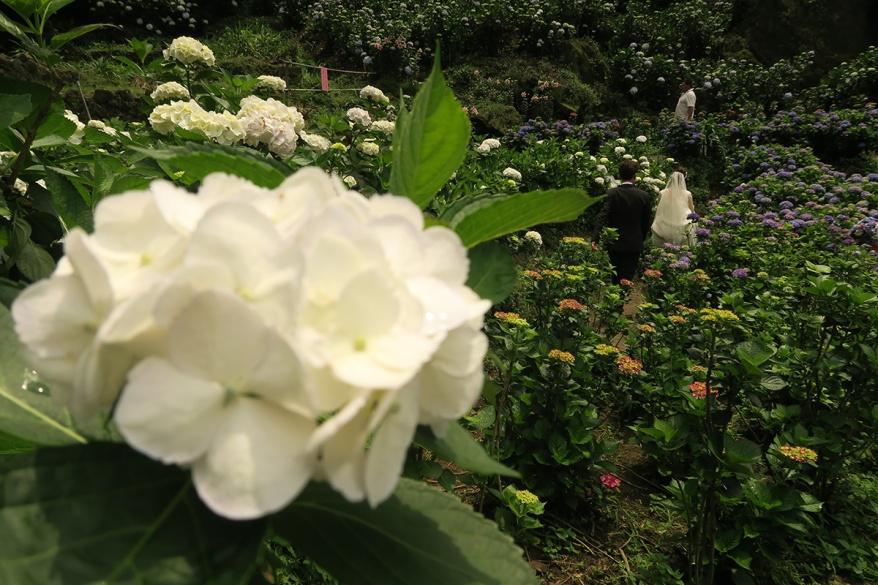 taibei_flower_71