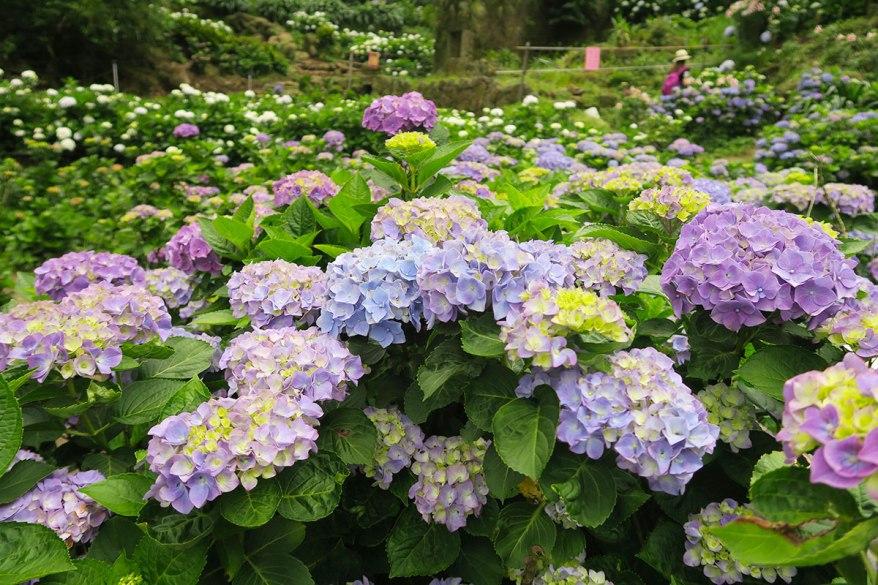 taibei_flower_74